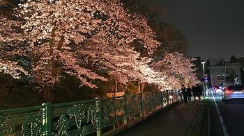 お堀夜桜.jpg
